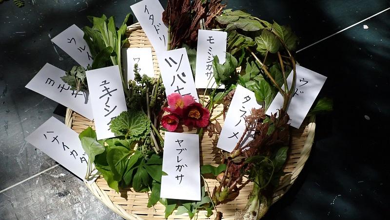 ユガテの森(飯能市)で山菜採り体験
