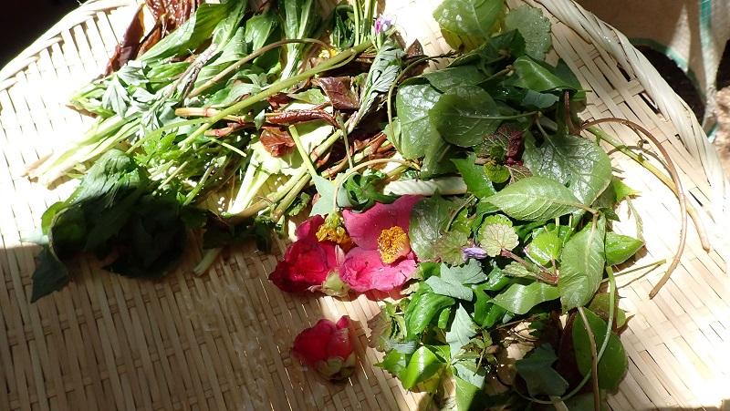 収穫した山菜を軽く水洗い