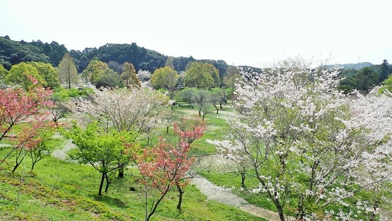 RECAMP勝浦の春は桜がみごと