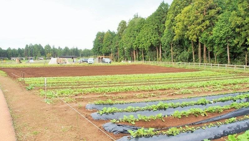 ザファーム千葉 テントエリア手前の農園